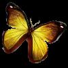 Schmetterling Gold